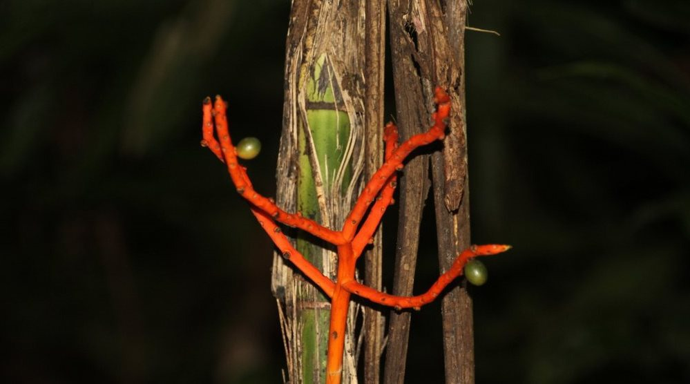 Parque Nacional Carara Costa Rica