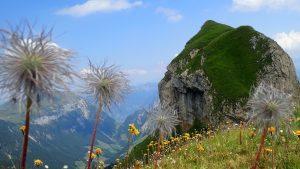 Oberalper Grat