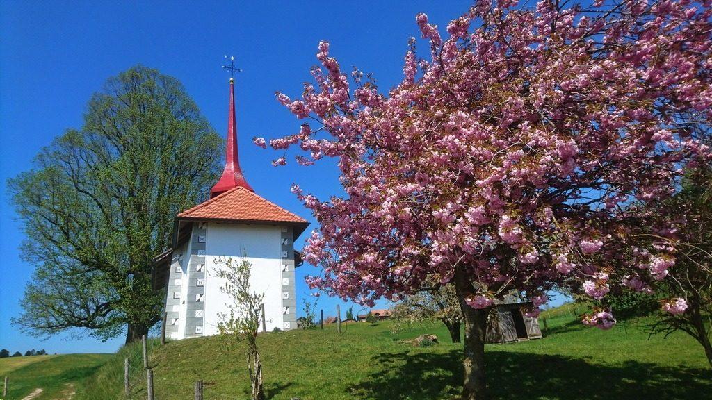 Kapelle beim Unter Herreweg bei Ruswil mit blühendem Kirschbaum. 1.5.2019