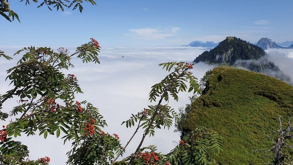 Blick vom Chli Aubrig über das Nebelmeer zum Gross Aubrig, Säntis und Brüggler. 23.8.2019